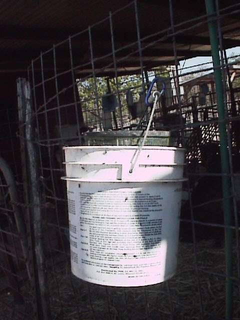 Here is what the whole bucket looks like, notice it is a very small bucket that is only a few inches wider than the trap. This helps to direct the flies up into the trap.