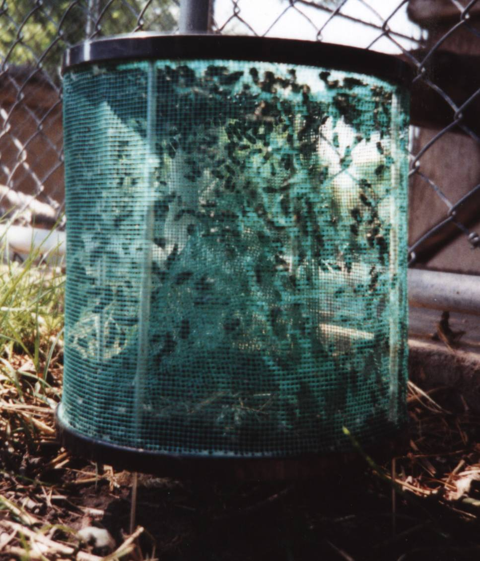 A full Rid-Max Fly Trap